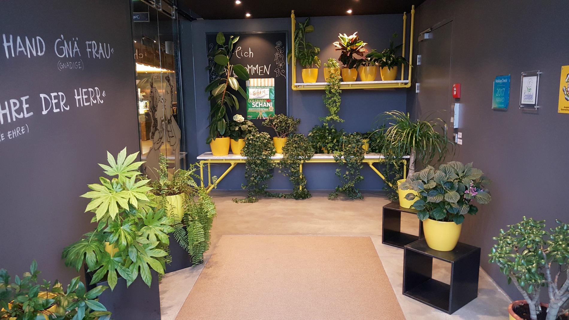 hotel-schani-wien-entrance-plants