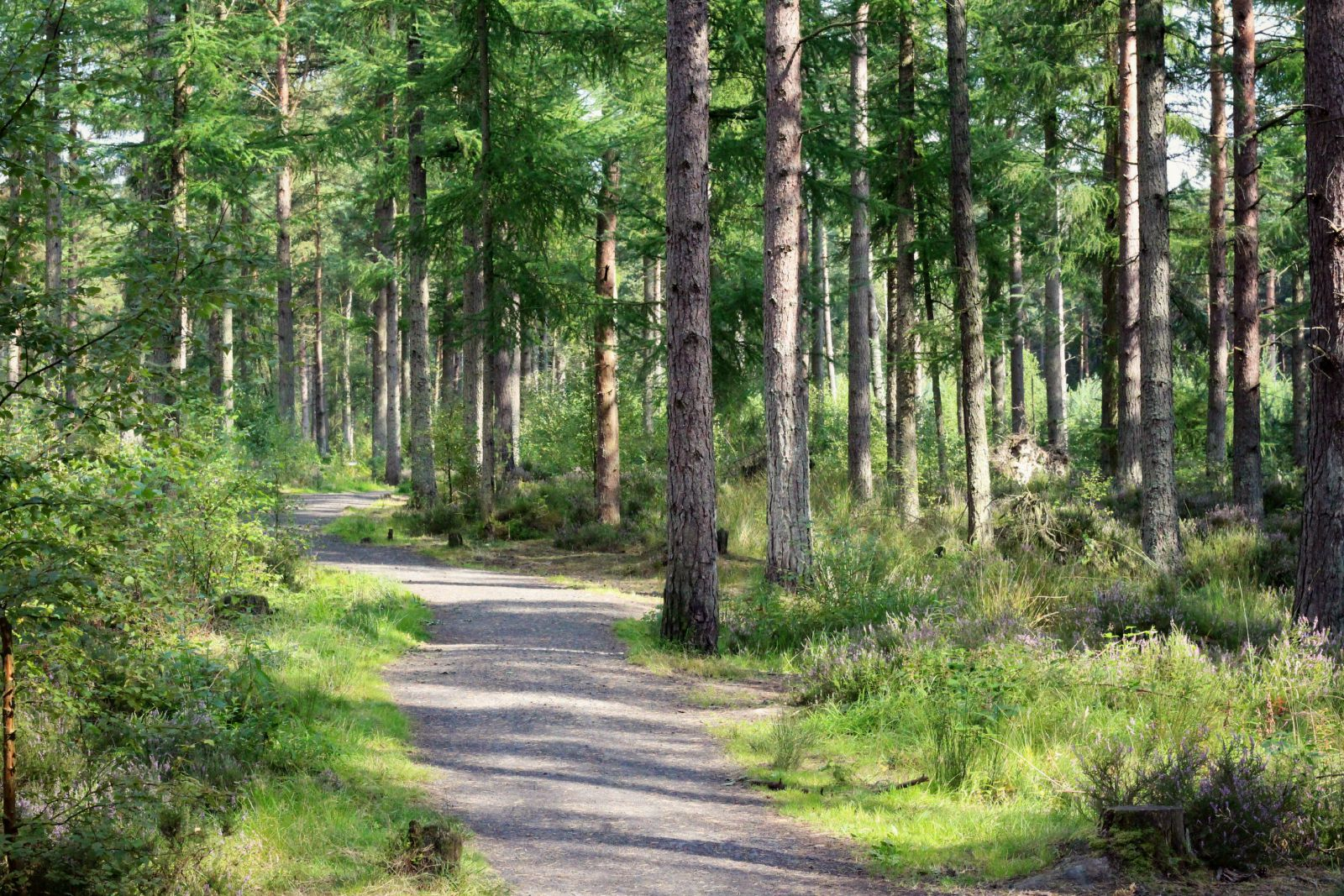 Accessible Scottish Walks Devilla Forest wheelchair accessible