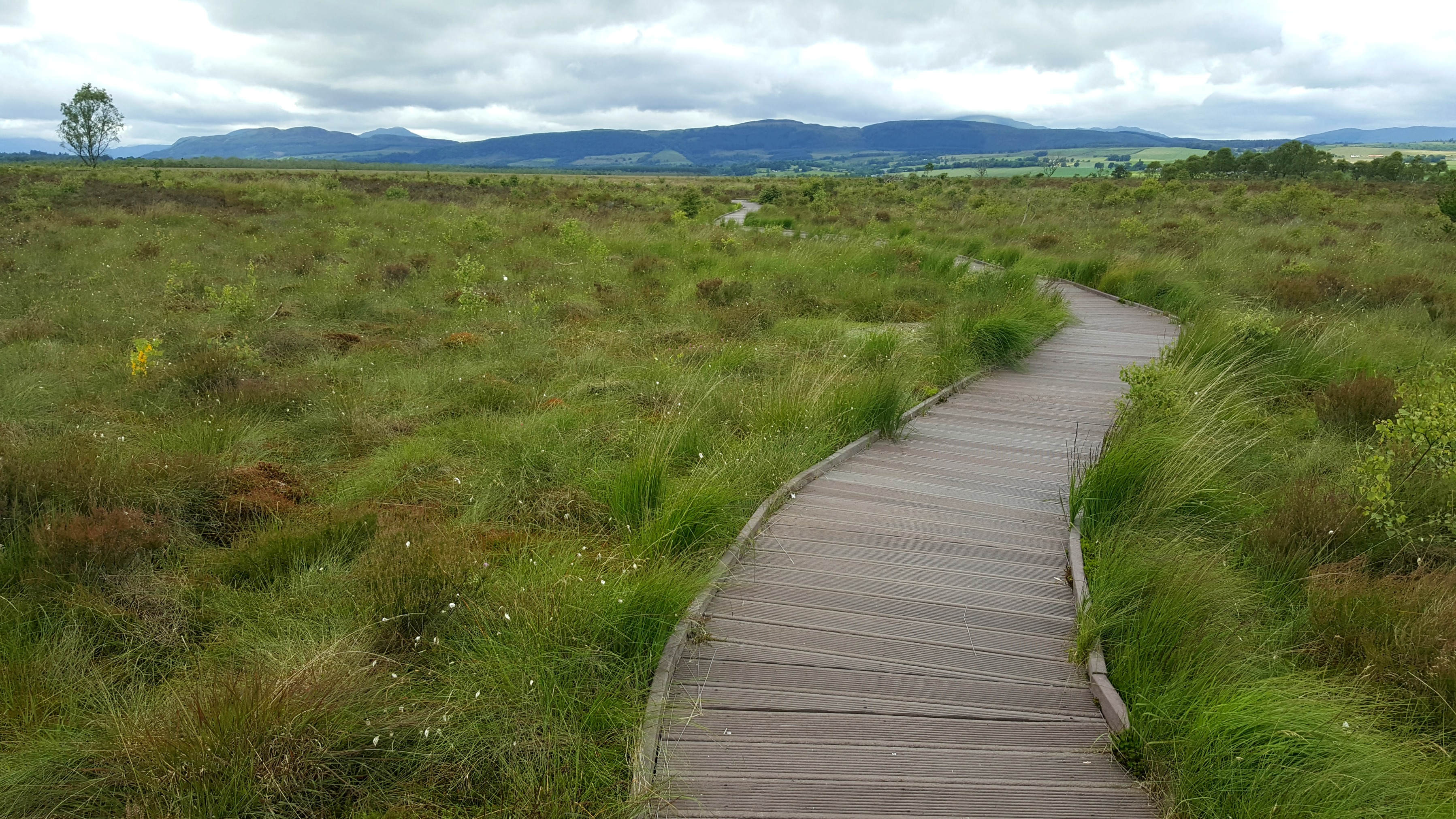 Flanders Moss National Nature Reserve boardwalk