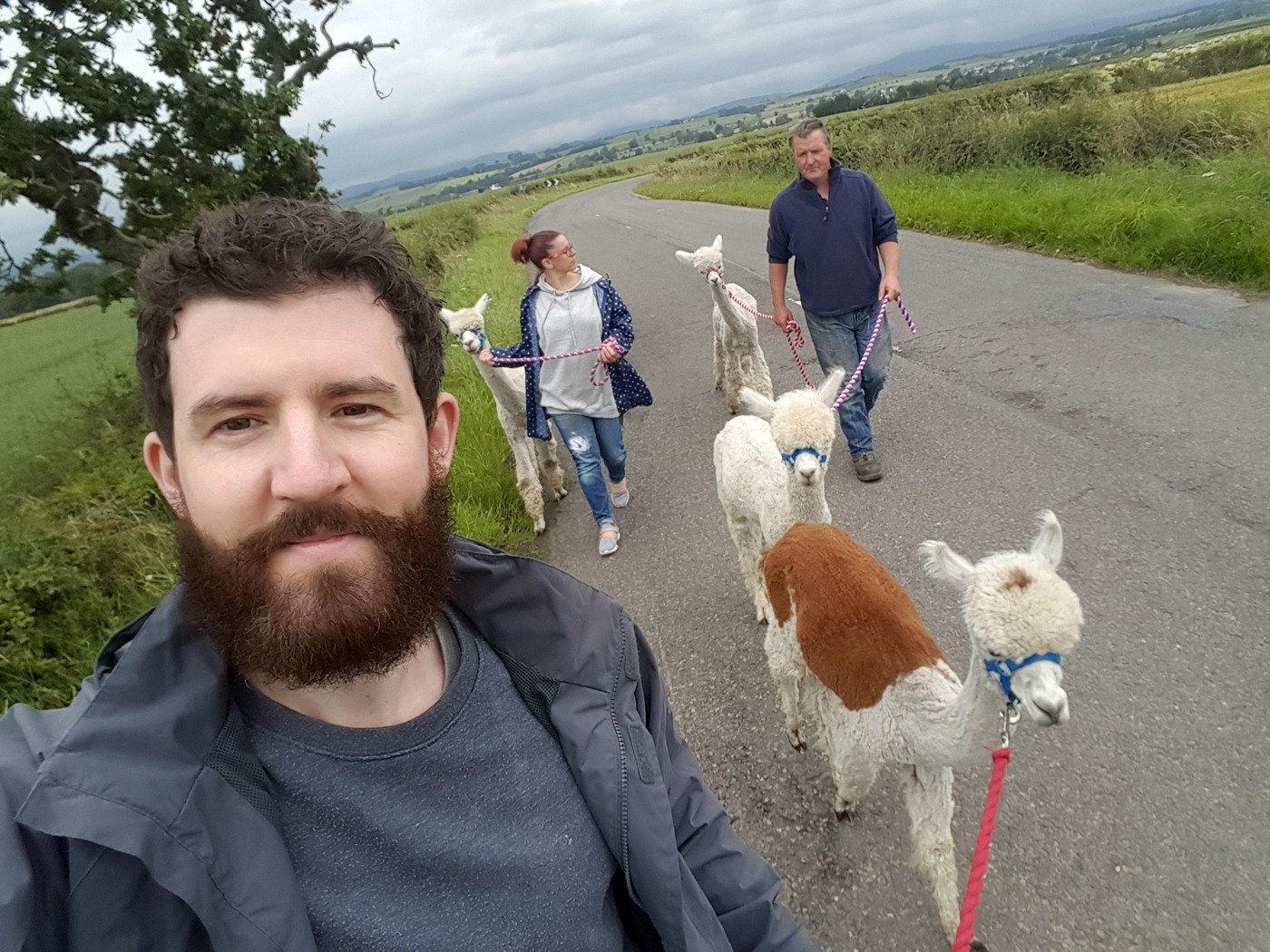 Alpaca trekking at The Alpaca Trekking Centre Stirling (2)