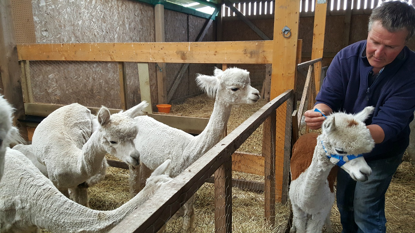 Dannie and Rown at The Alpaca Trekking Centre Stirling