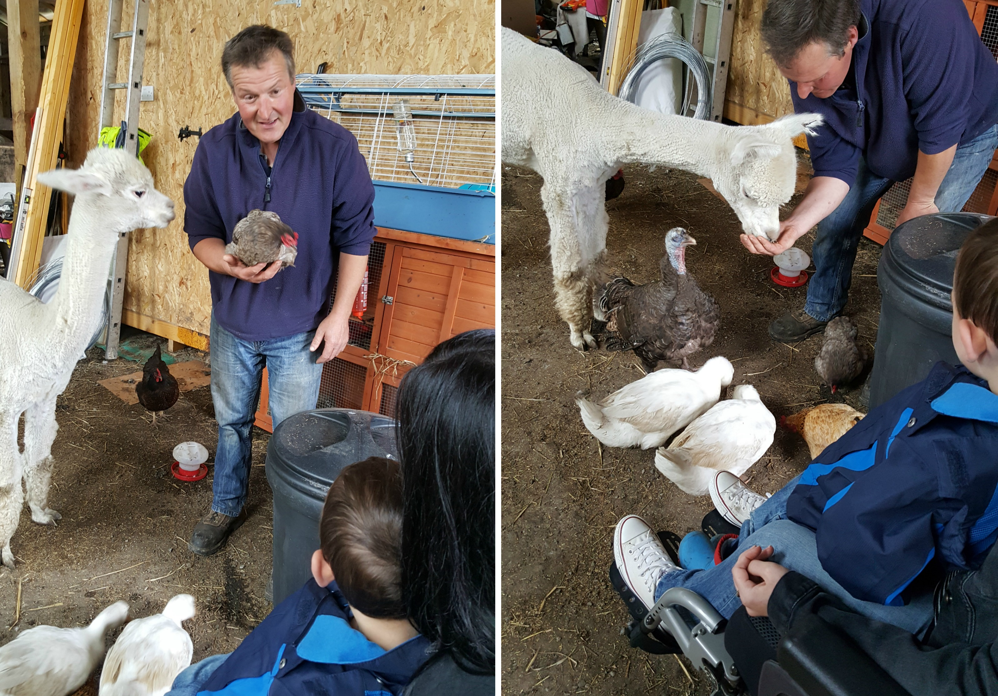 Meeting the animals at The Alpaca Trekking Centre Stirling