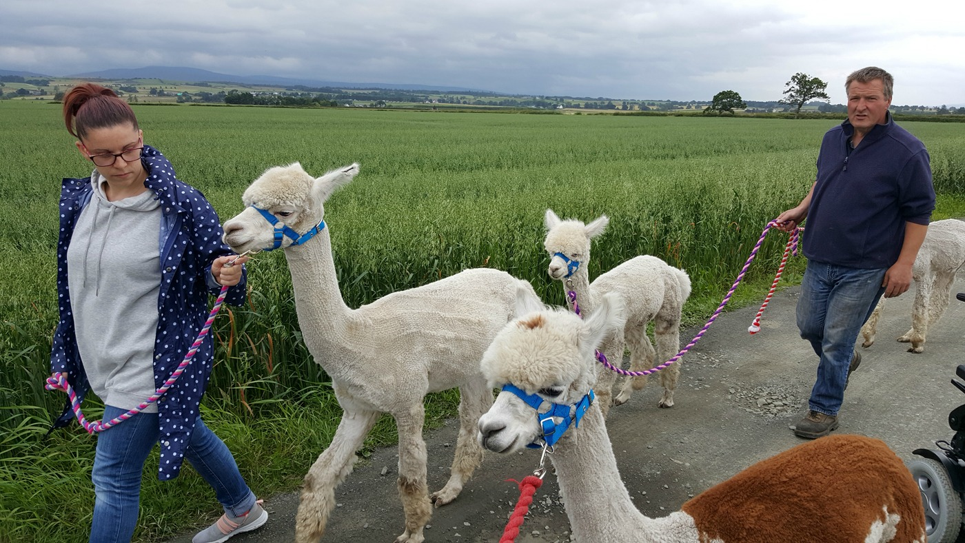 The Alpaca Trekking Centre Stirling Flandars Moss wheelchair accessible