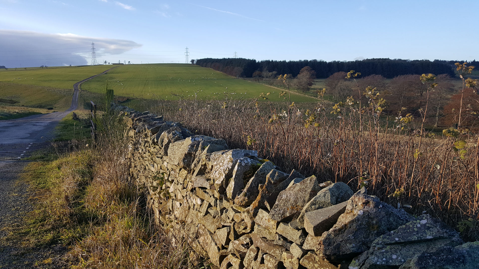 Track road to Airhouses Luxury Lodges in Scottish Borders with beautiful view of fields.