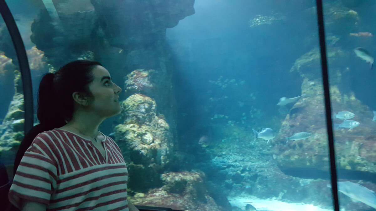 Favourite Accessible Things To Do In Barcelona: Emma sitting in her wheelchair while looking at the aquarium displays at Aquarium Barcelona.