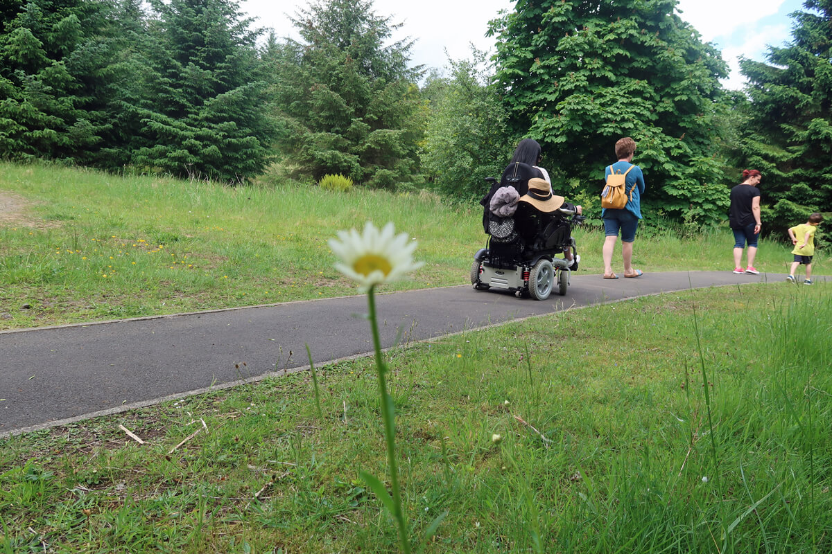 Emma and her family enjoying an accessible walk through an forest nature trail. The focus of the image is on the white daisy in the foreground.