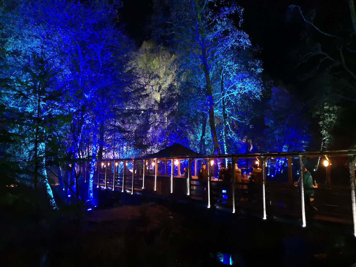 A bridge through the forest surrounded by blue lit up trees.