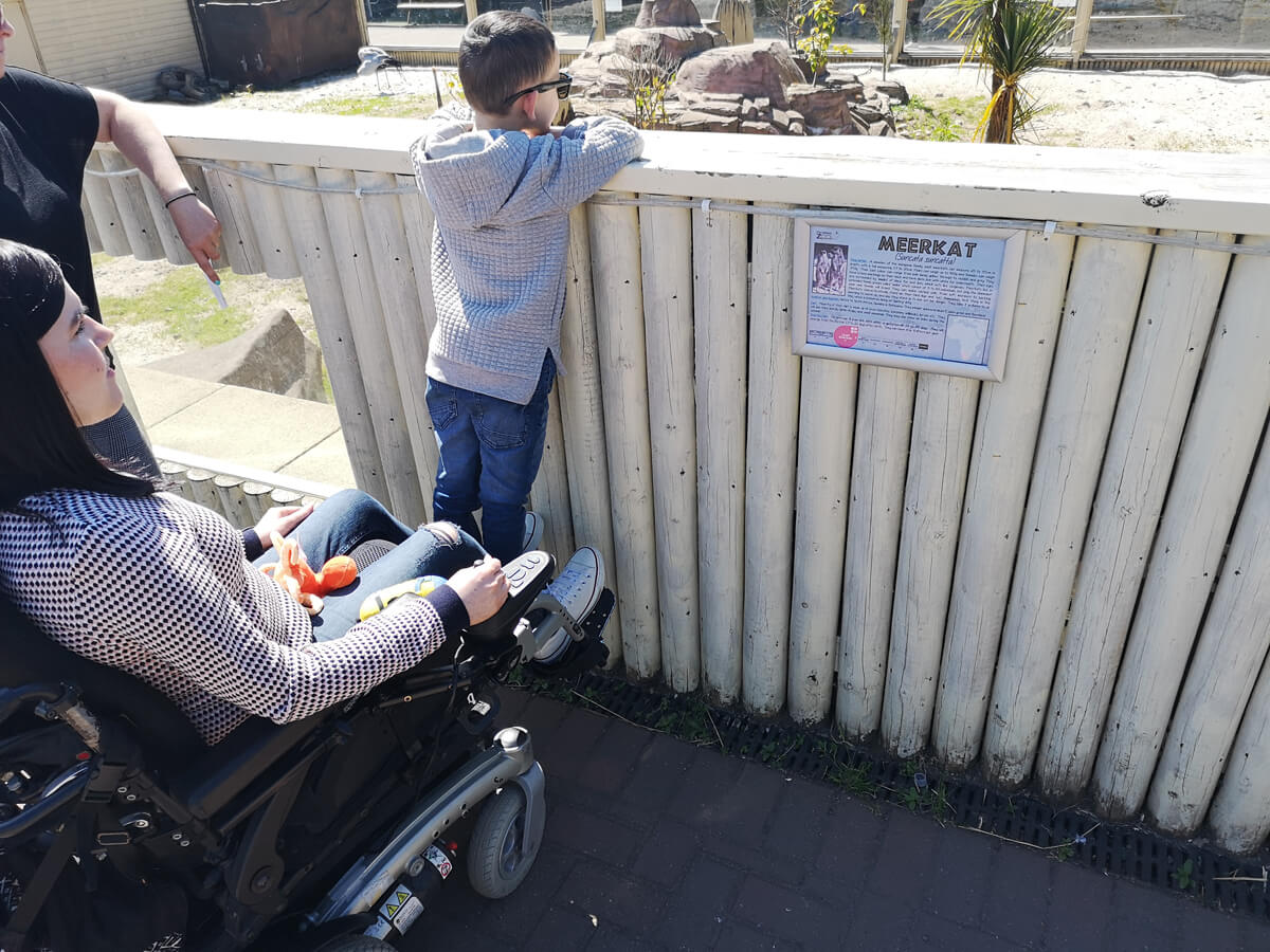 Emma is sitting in her wheelchair while her nephew is standing on her footplates. He is peering over the fence to look at the meerkats.