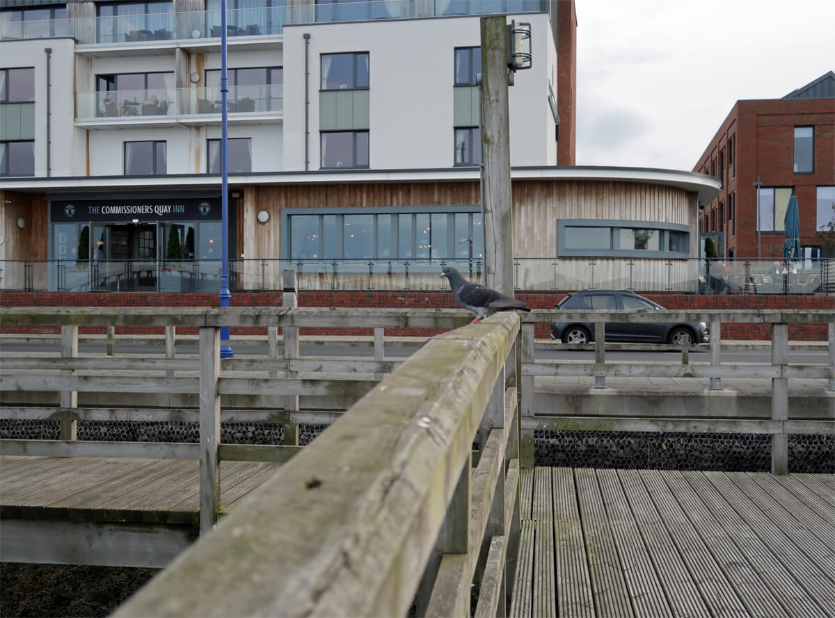 A pigeon sitting on a wooden beam at Blyth Harbour and The Commissioners Quay Inn is in the background.