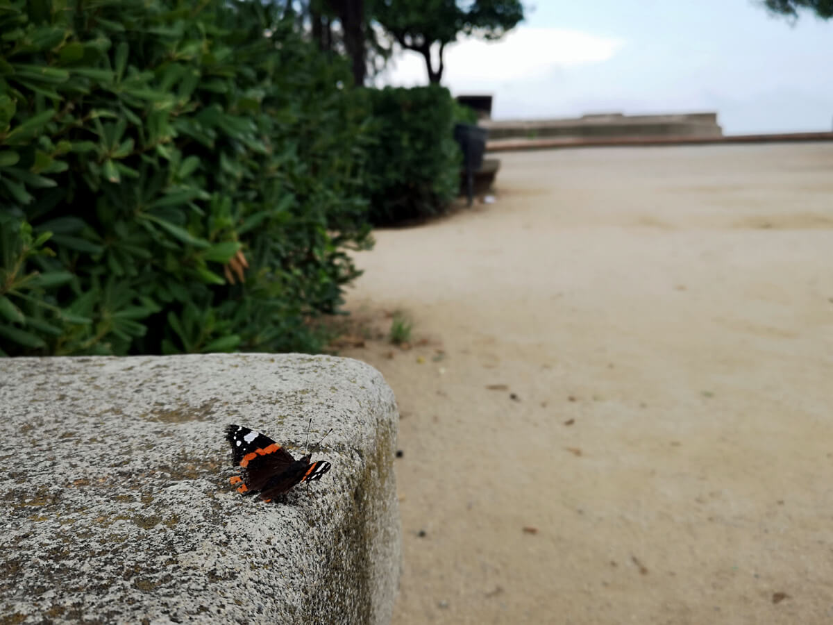 A black and orange butterfly sitting on a wall in Montjuïc Castle