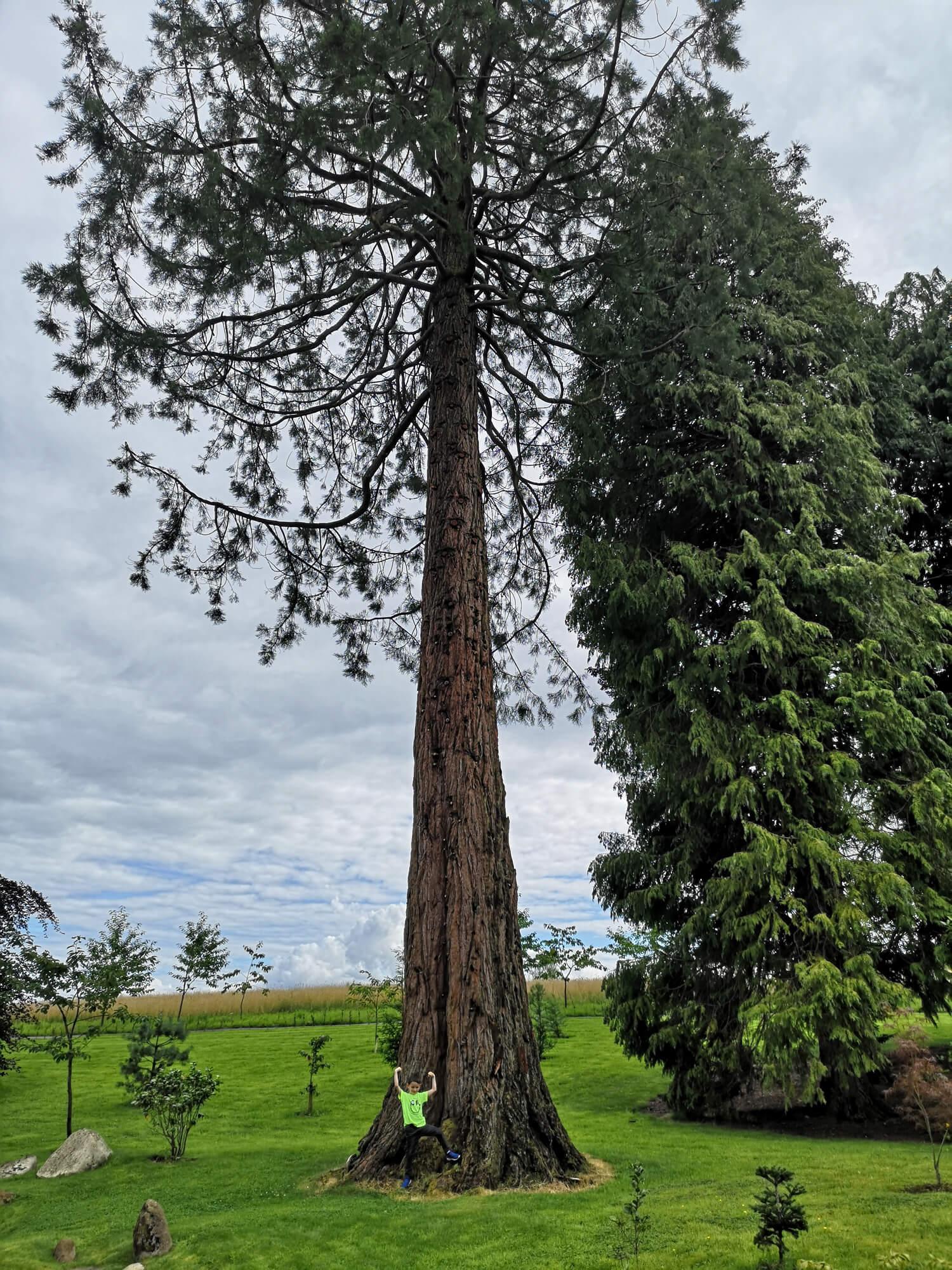 Emma's nephew standing beside a massive tree.