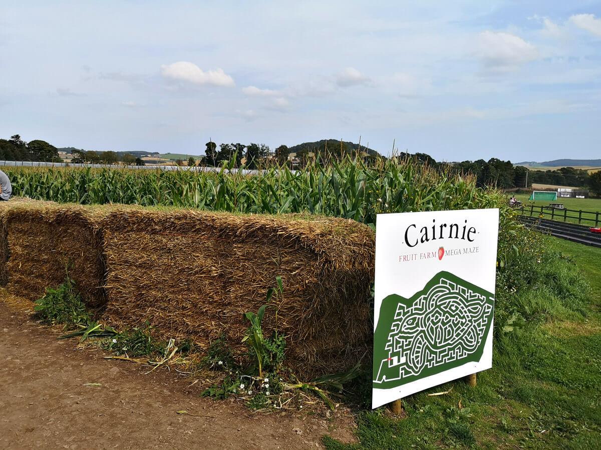 Cairnie Fruit Farm Mega Maze