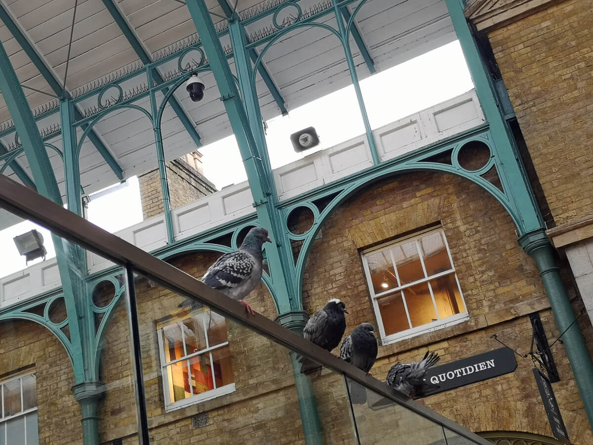 Pigeons in Covent Garden sitting on the overhead railings.