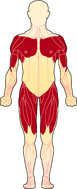 A drawing of a human body showing the affected muscles.