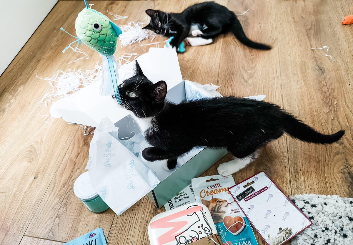 Two black and white kittens playing with their toys from the Gus & Bella cat subscription box.
