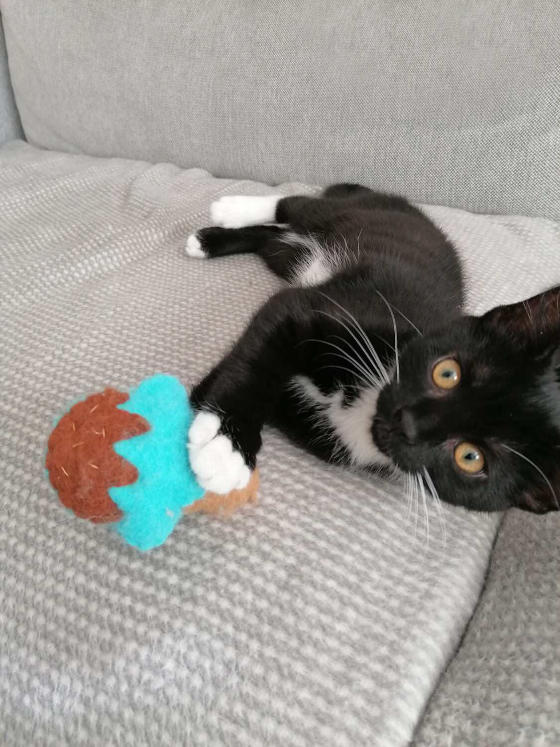 black and white kitten laying on her side on the sofa playing with a ice cream cat toy.