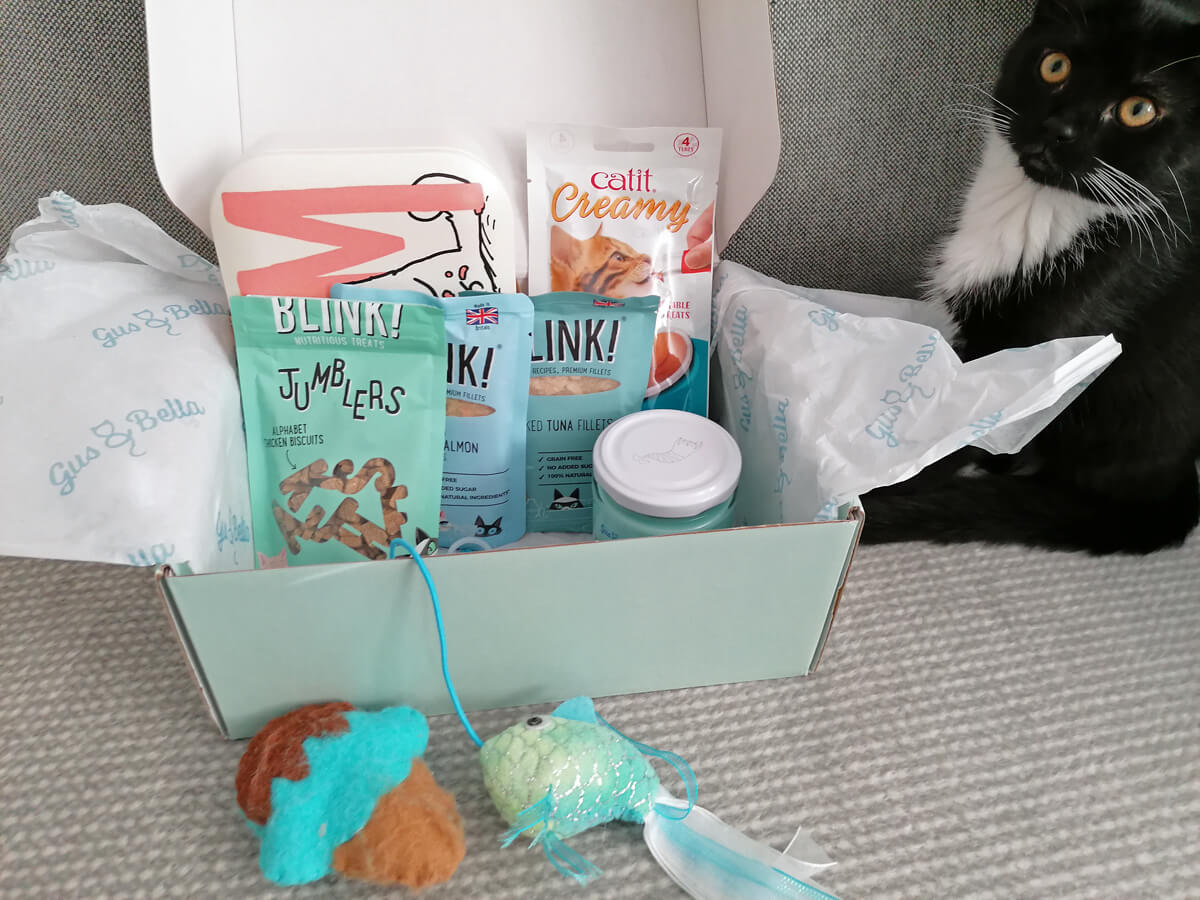 A black and white kitten sitting on the sofa next to the Gus & Bella cat subscription box. The box is open showing all the contents inside.