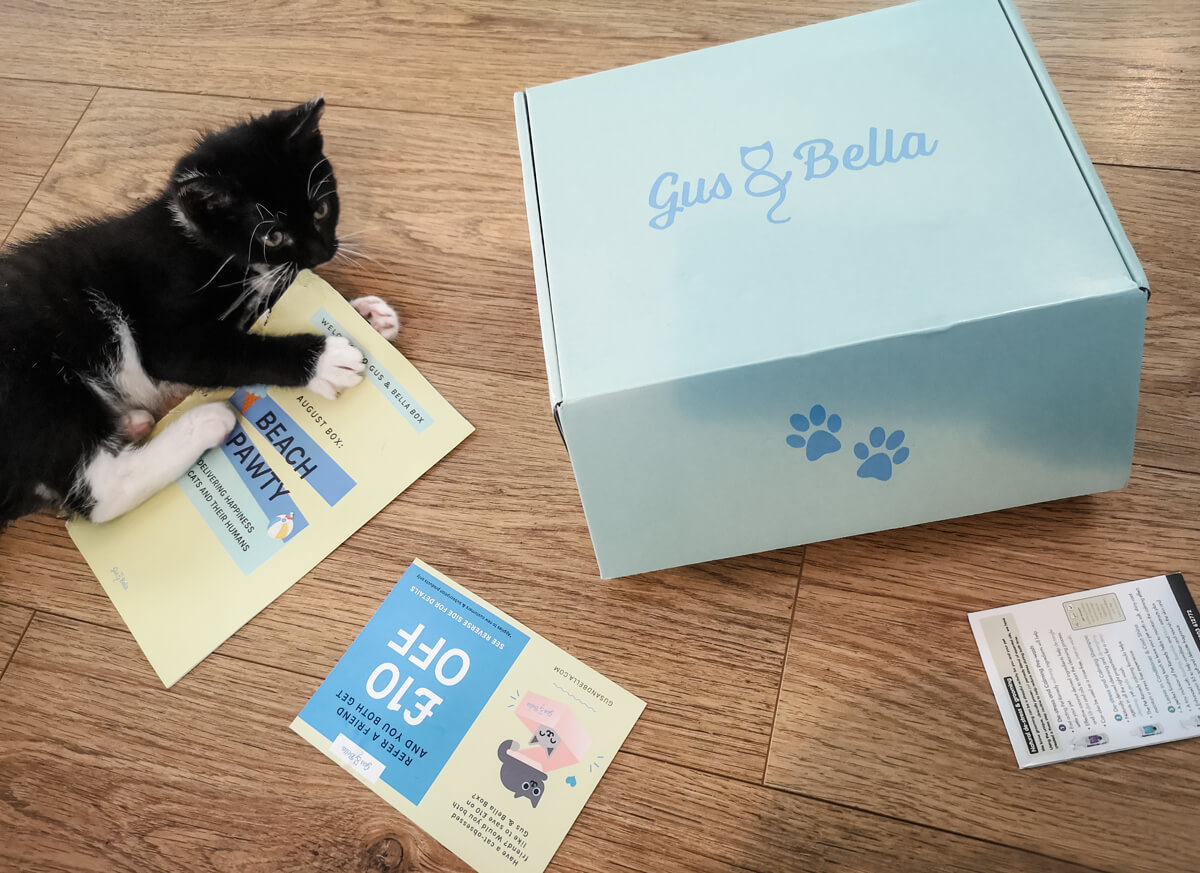 A black and white kitten laying on the floor next to the Gus & Bella cat subscription box. The kitten is black and white. She is chewing on a leaflet.