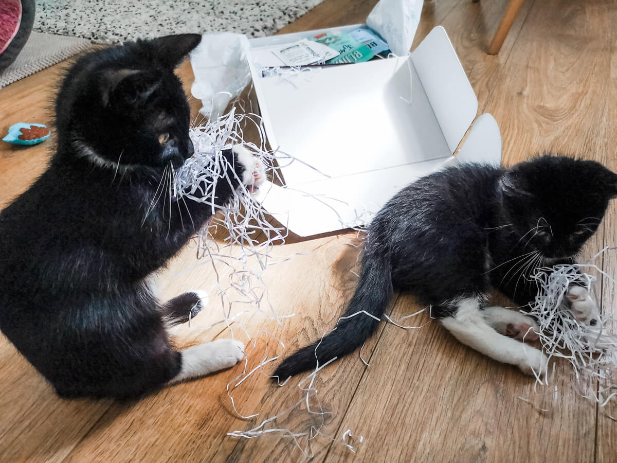 Two black and white kittens laying on the floor next to the Gus & Bella cat subscription box. They are both playing with the packaging from the box.