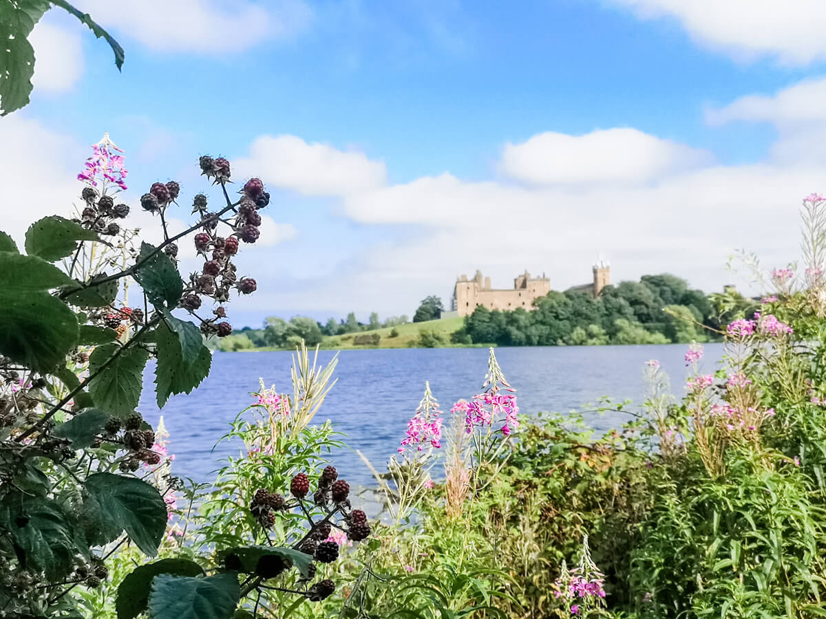 The loch and Linlithgow Palace in the background out of focus. The main focus of the image is the plants and berry bushes.