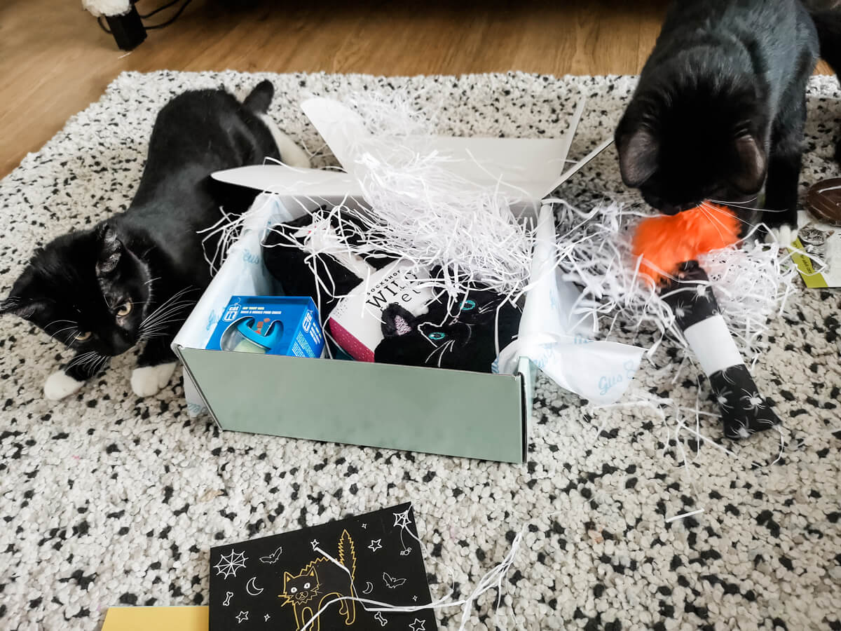 Arlo and Willow (two kittens) are laying next to the Gus & Bella cat subscription box while playing with the toy and shredded paper packaging.