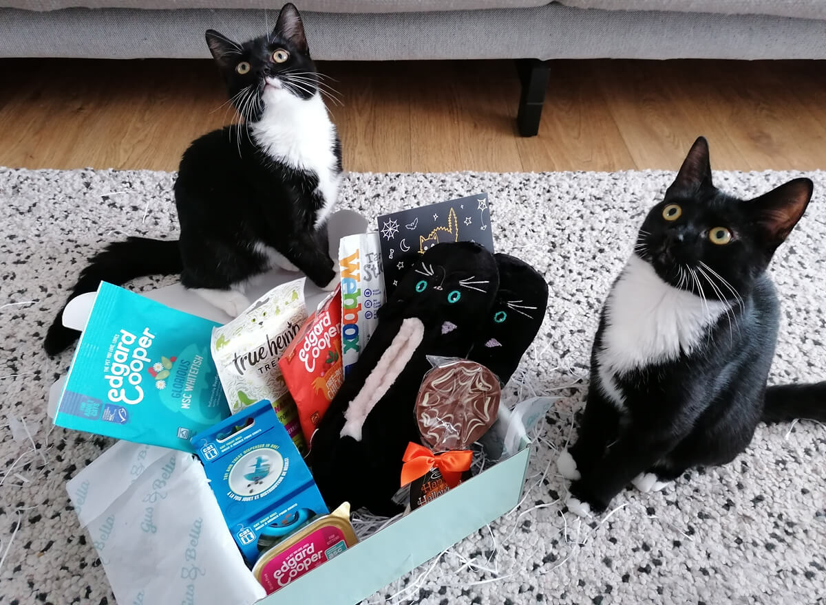 Two black and white kittens sitting behind a subscription box filled with treats and toys. They are both looking up with their big bright eyes.