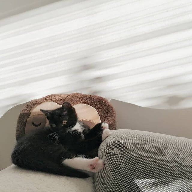 Black and white tuxedo cat laying on the sofa next to a brown sloth cushion.