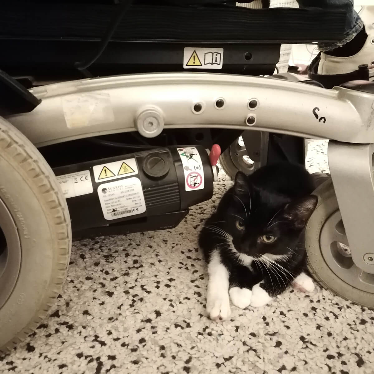 Tuxedo kitten Arlo laying under wheelchair with her legs sticking out at the front.