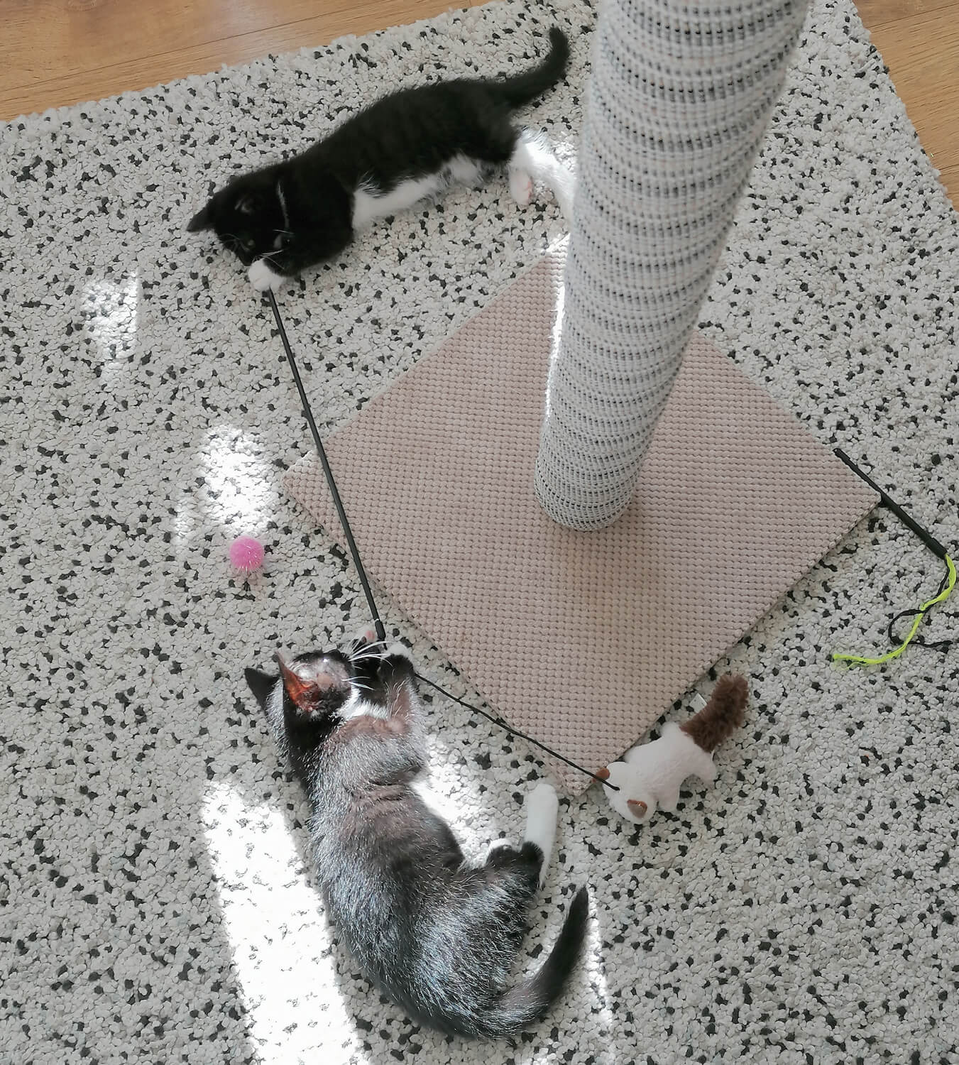 Two tuxedo cats laying on a rug next to a huge cat scratching post. They are both playing together.