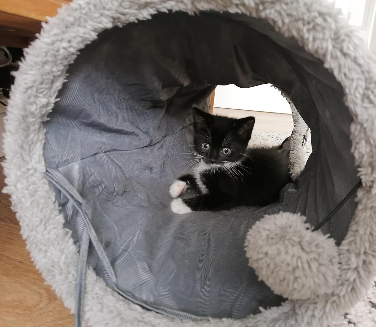 Arlo laying inside her grey cat tunnel. She is looking straight into the camera.