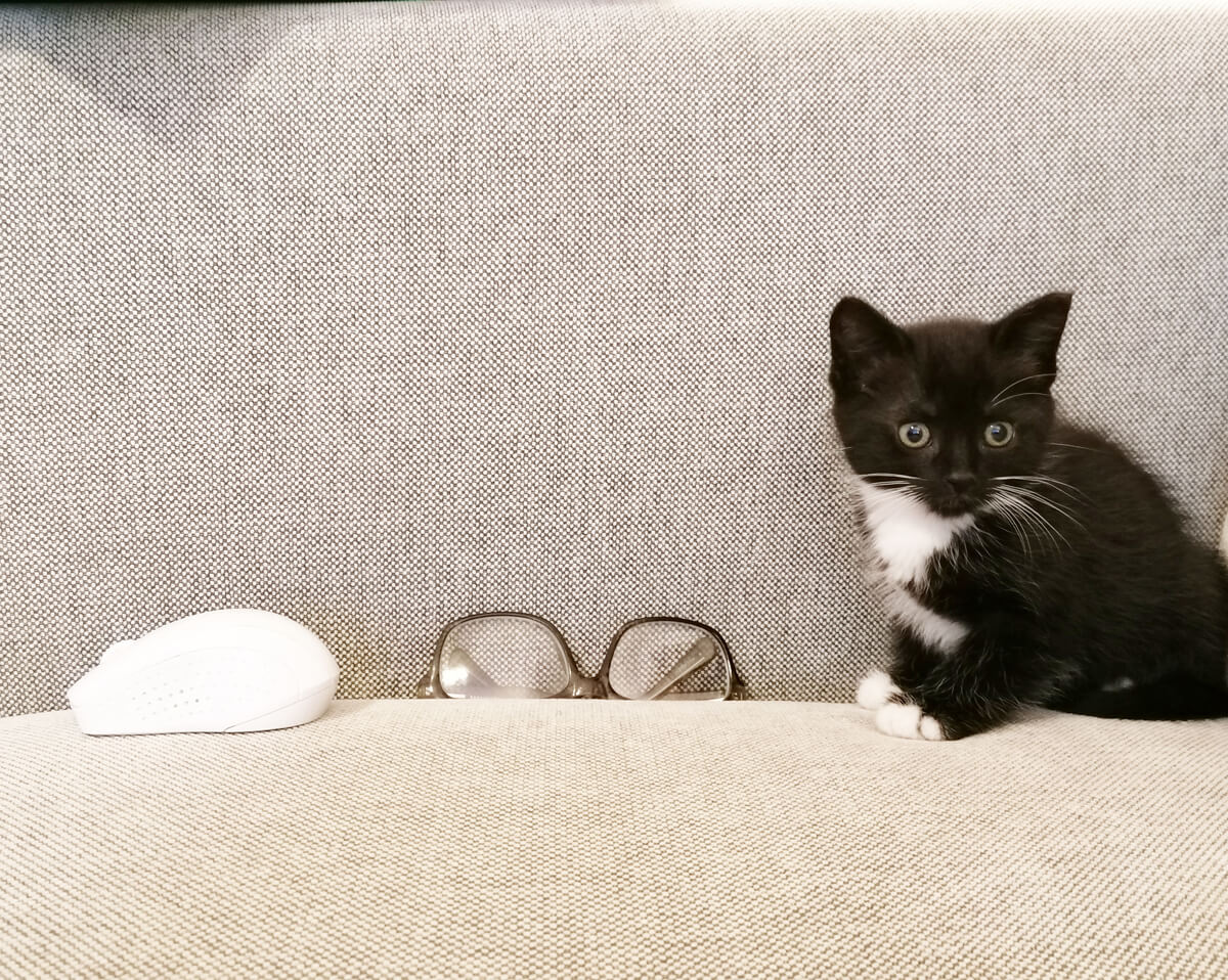 Tuxedo kitten Willow sitting on the sofa next to eye glasses and a computer mouse which shows how small she is.