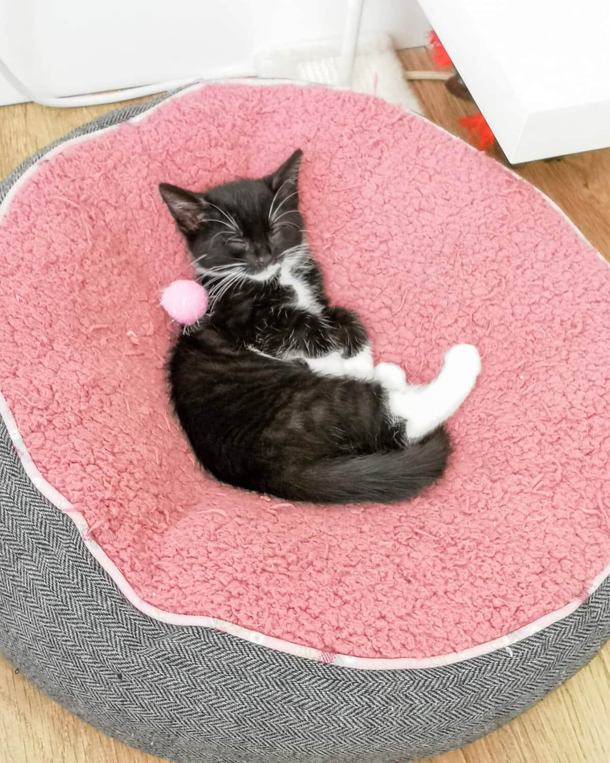 Black and white kitten laying on the back in a pink and grey circle shaped cat bed.