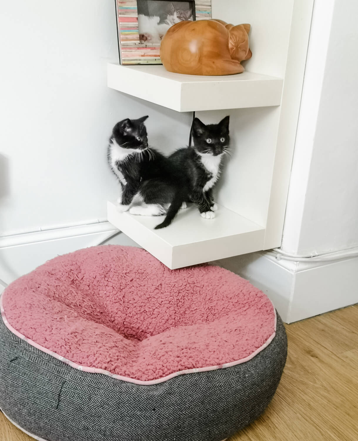Two black and white (tuxedo kittens) sitting on a low shelf with a shelf above them which has a wooden cat shape box containing the ashes of Milo (Emma's first cat) as well as a framed photo of Milo. The kittens are tiny and fit in the box shelf perfectly. Below them is a pink and grey cat bed.