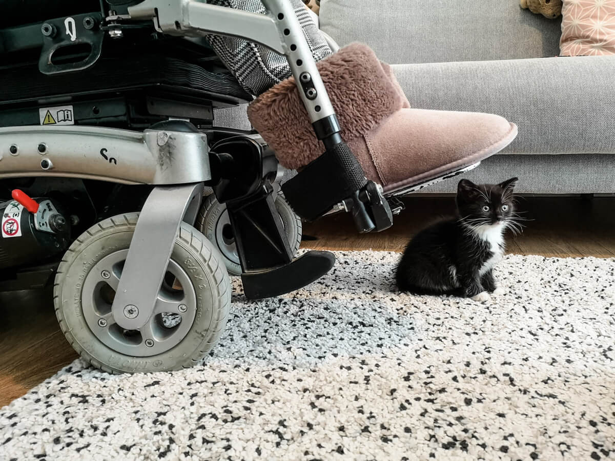 Tiny Tuxedo kitten sitting under the foot plates of my wheelchair. She is so tiny that the wheelchair looks huge. I am wearing fluffy slippers.