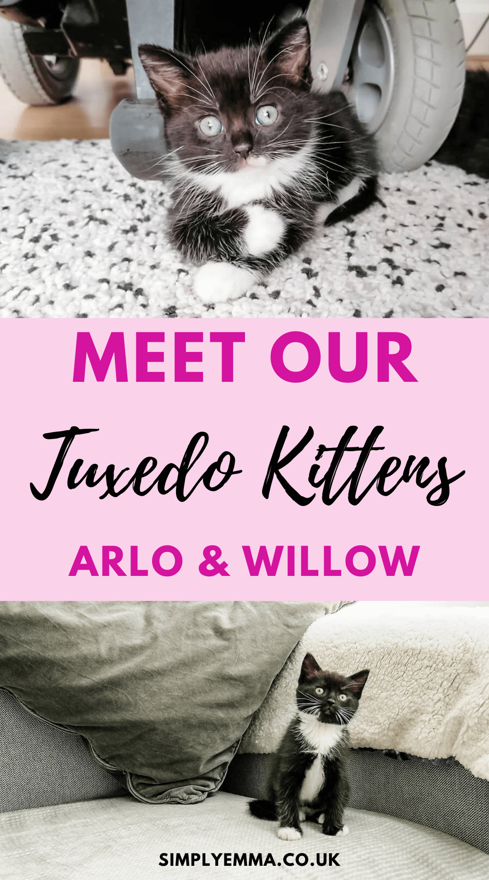 """Two images of tuxedo kittens with pink text box with the words """"Meet our Tuxedo kittens, Arlo and Willow""""."""