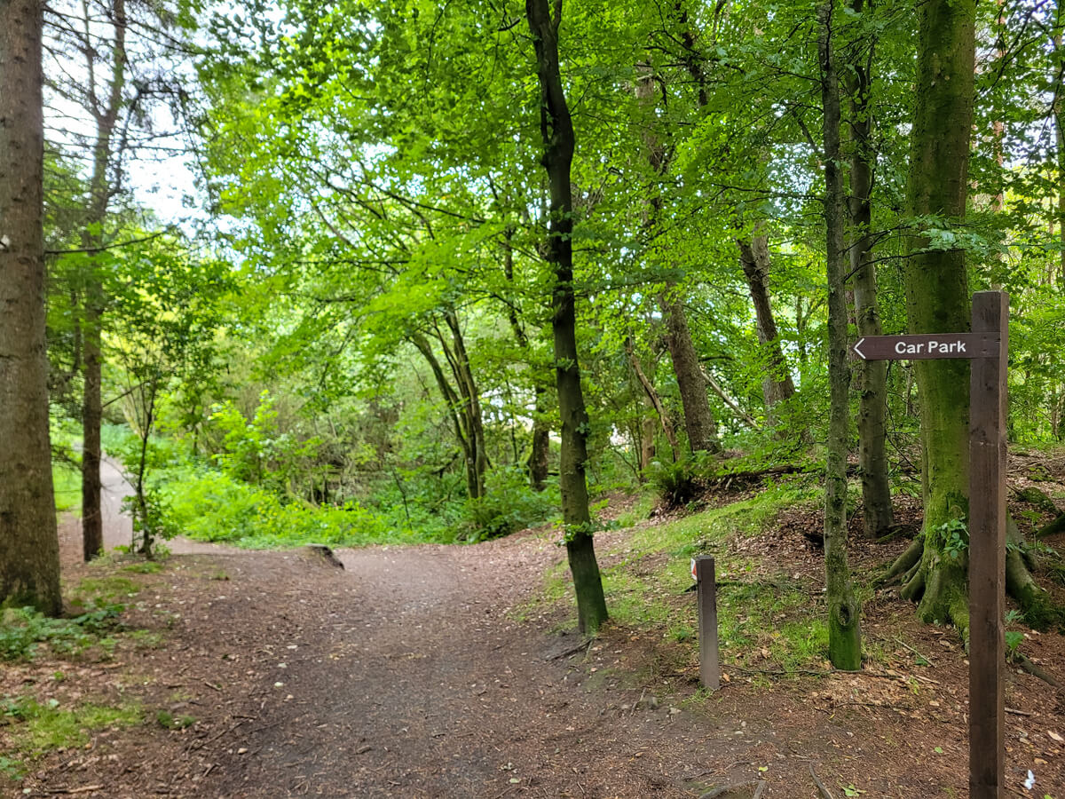 A view of the wheelchair accessible paths at Doune Ponds showing the trail through the forest.