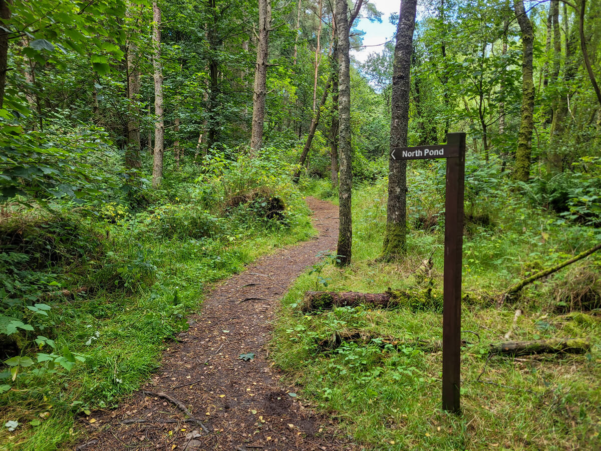 """A wooden sign with the words """"North Pond"""" showing the directions on the path."""